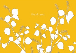 C3X50041 3x5 Occasion Card, Blank Inside - Thank You